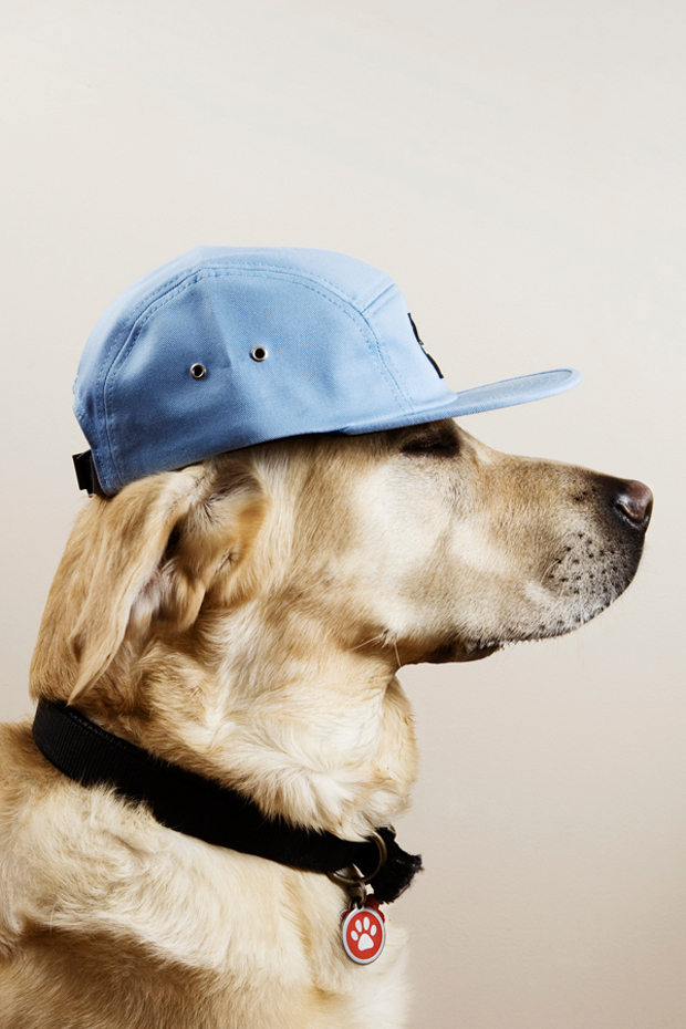 the chimp store chimptown dogs editorial
