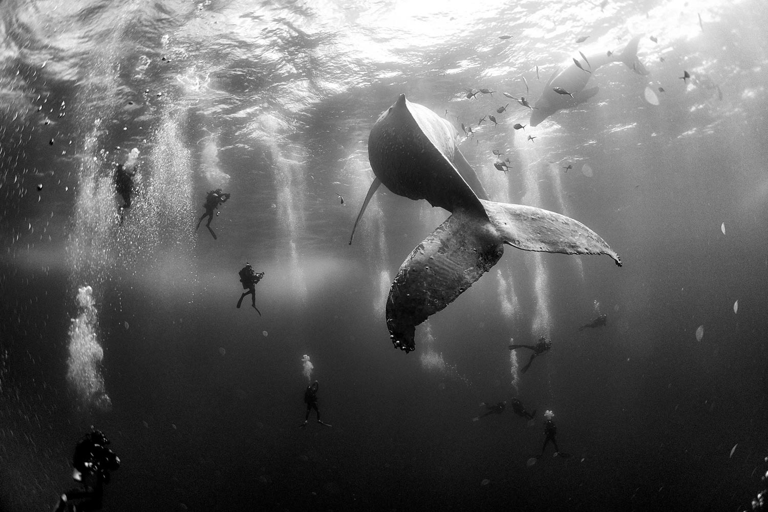 press contest winners hypebeast whale winning winner patjane anuar nature prize photographer foto divers premio whisperers sea under photograph whales