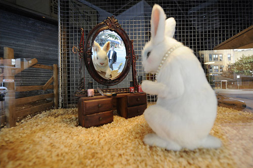 banksy the village pet store and charcoal grill opening in nyc